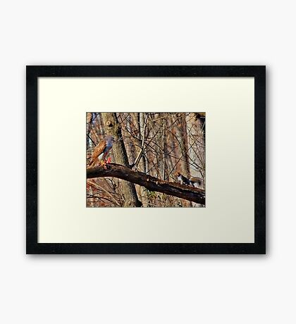 Red-Tail Hawk has a Visitor Framed Print