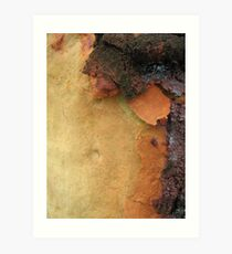 Coloured Bark Art Print