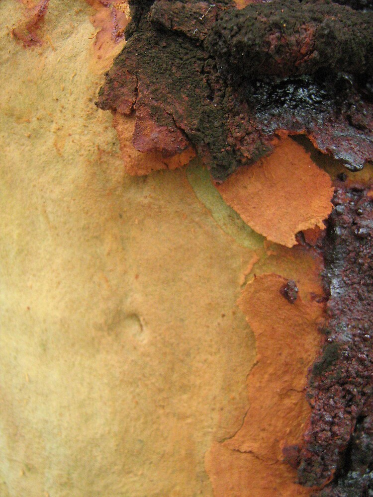 Coloured Bark by Patricia  Knowles