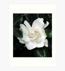 Gardenia Mixed media - yeah praps a bit cliched but I love it Art Print
