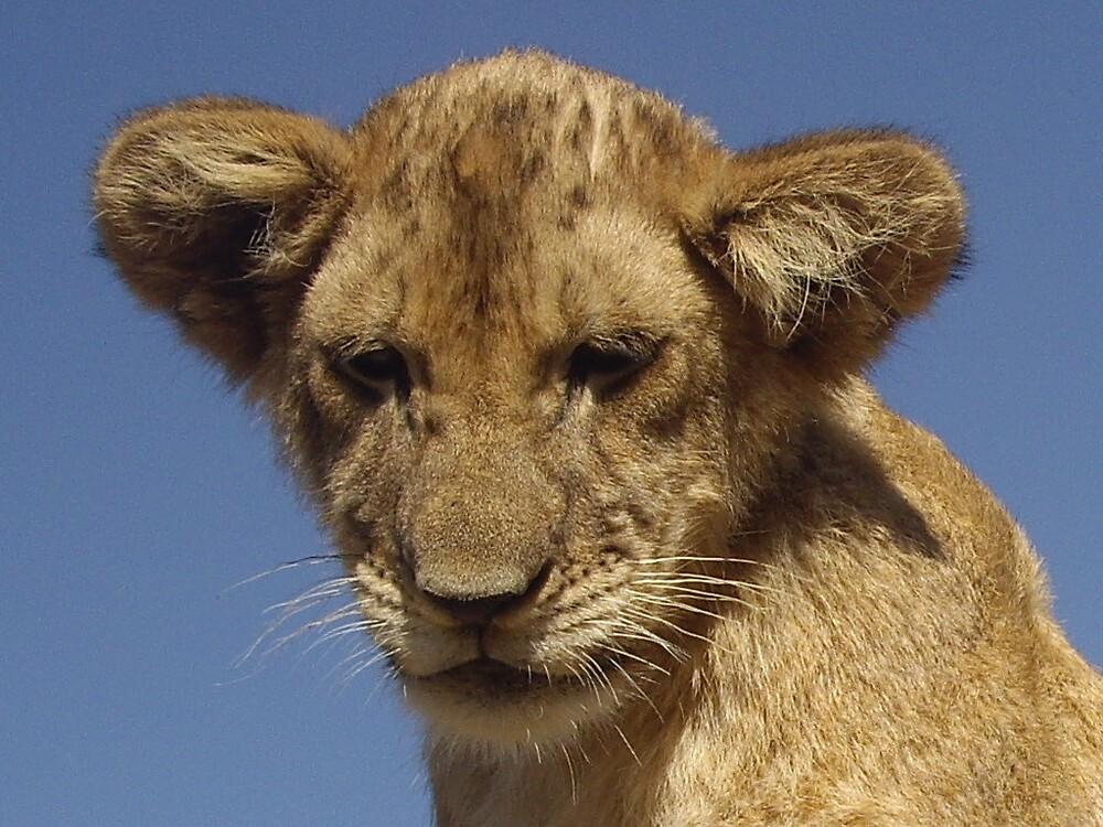Lion cub  by Kellwalton