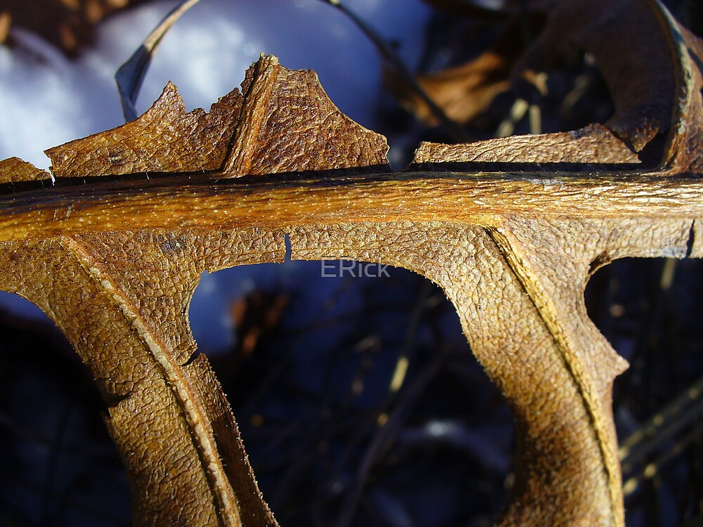 Leather Leaf by ERick