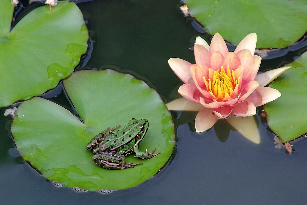 frog and a lilly by samantha jefferson