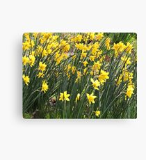 Daffodils 260317v1 Canvas Print
