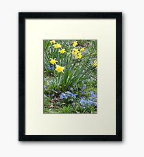 Daffodils 260317v2 Framed Print