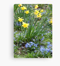 Daffodils 260317v2 Canvas Print