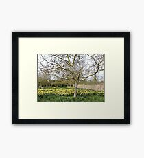 Daffodil Trees Framed Print