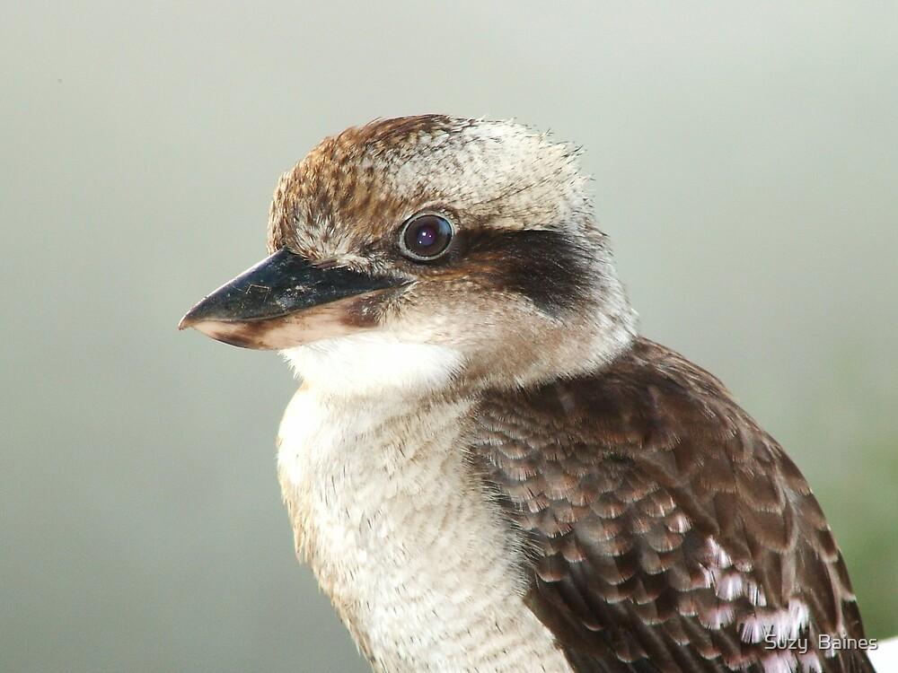 Kookaburra by Suzy  Baines