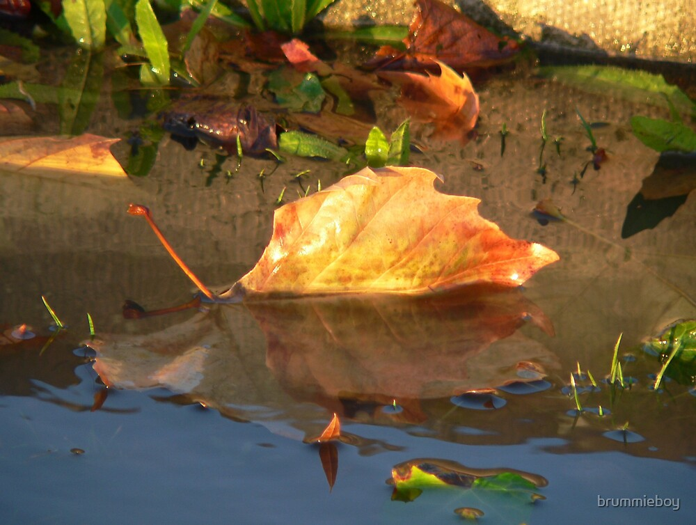 Reflective leaf (2) by brummieboy