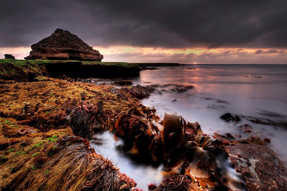 Kelp Garden Sunset by Robert Mullner