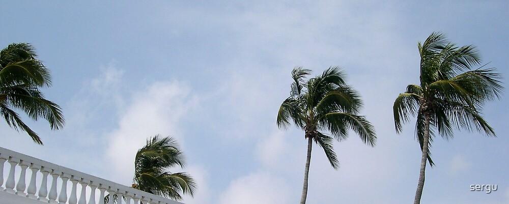palme by sergu