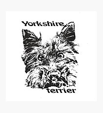 Yorkshire Terrier  Cute dog  lovely pet  Photographic Print
