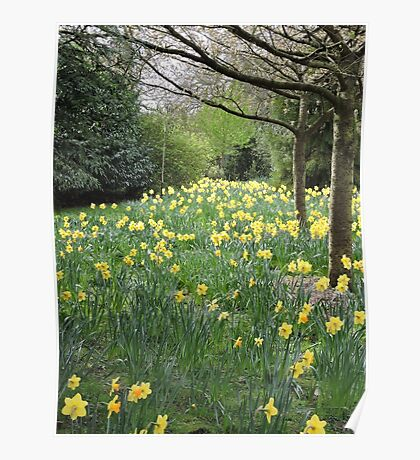 Daffodil Pathway Poster