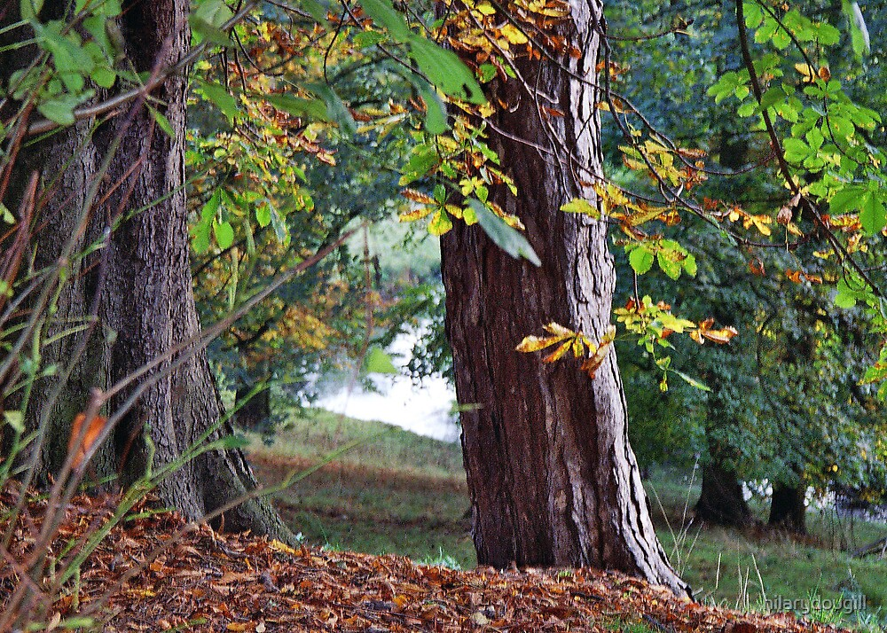autumn tree by hilarydougill