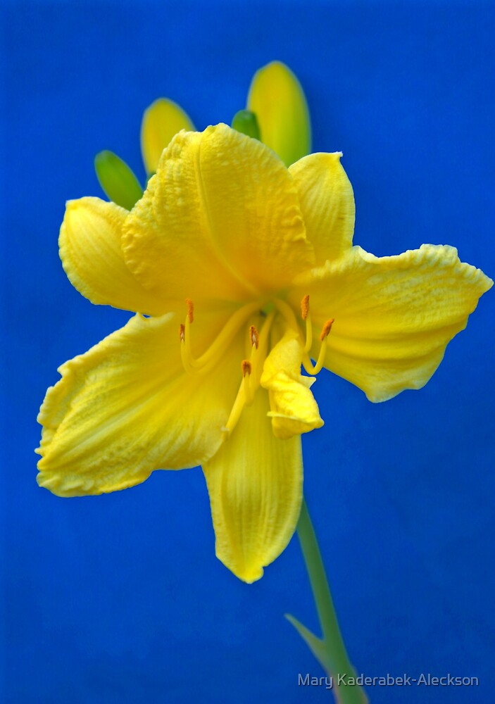 Blue Yellow Wow by Mary Kaderabek-Aleckson