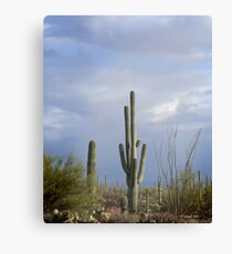 Late Afternoon in the Desert Canvas Print