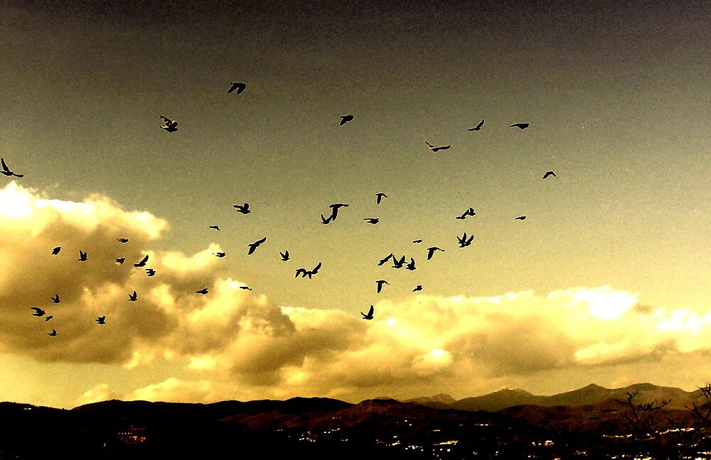 Flock! by honey