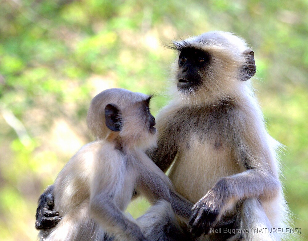 Langur Monkey Siblings by Neil Bygrave (NATURELENS)