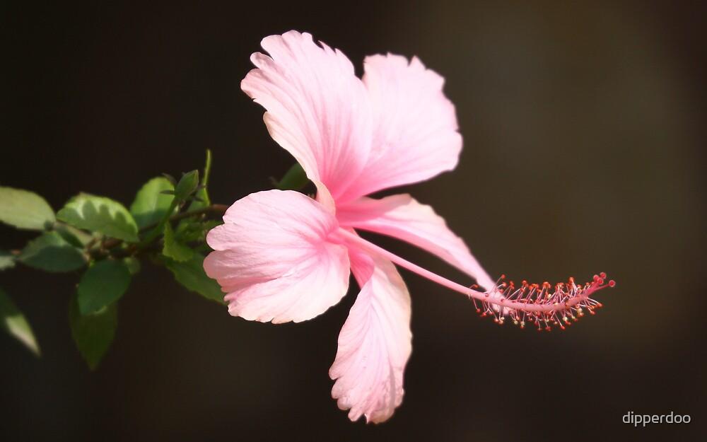 Pink Flower by dipperdoo