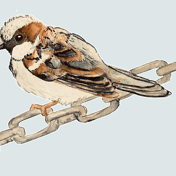 House Sparrow by FayeP
