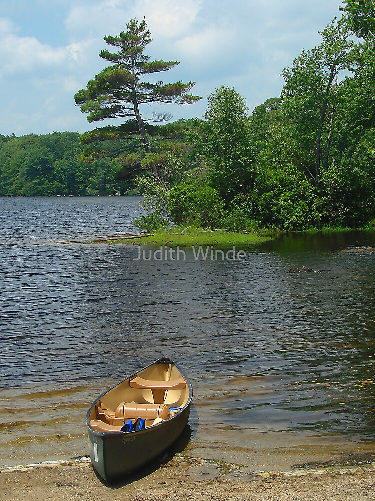 Leaning Pine in the Summertime by Judith Winde