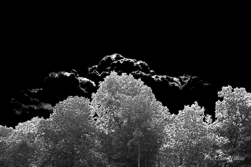 Tree Huggers by Colin Walker