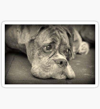 Luthiens Porträt in Monochrom - Boxer Dog Series Sticker