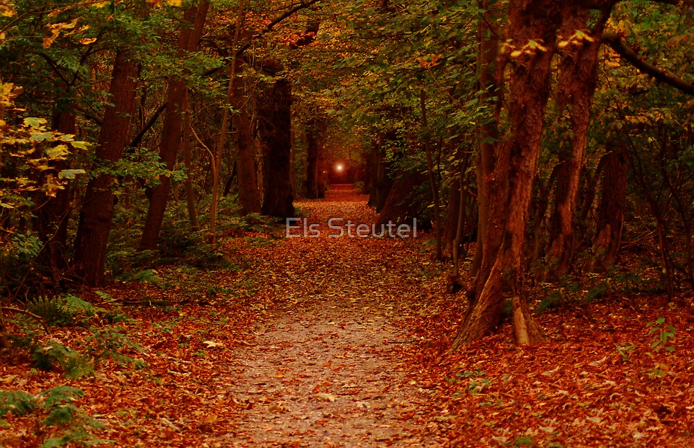 Follow the Light by Els Steutel