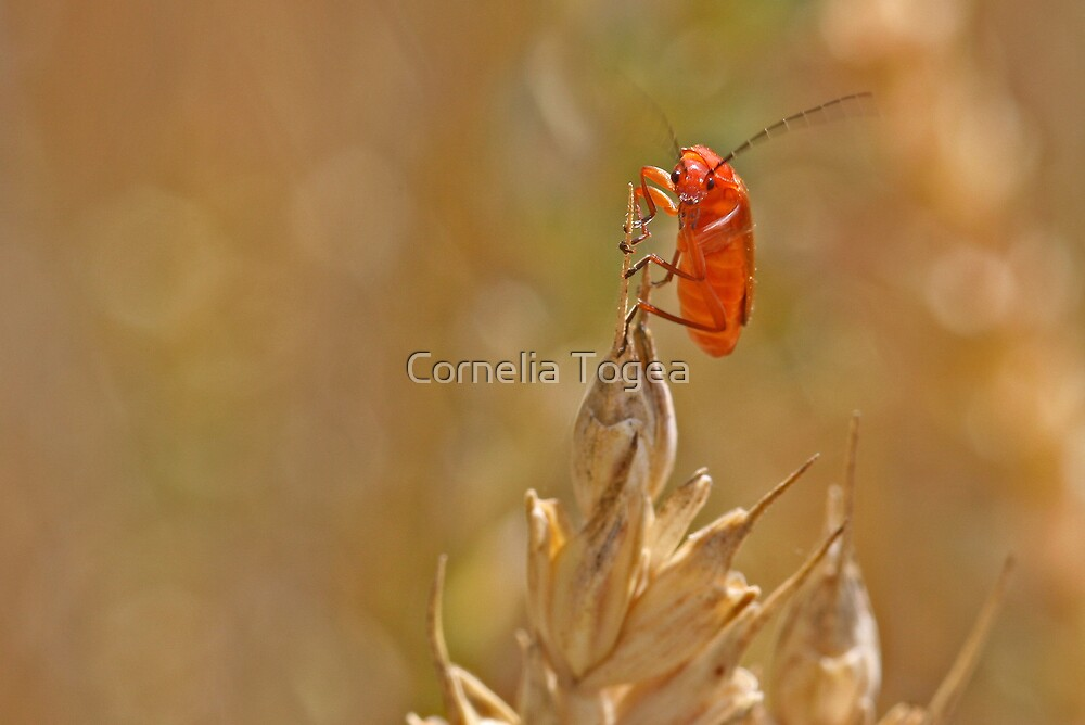 you lookin' at me? by Cornelia Togea