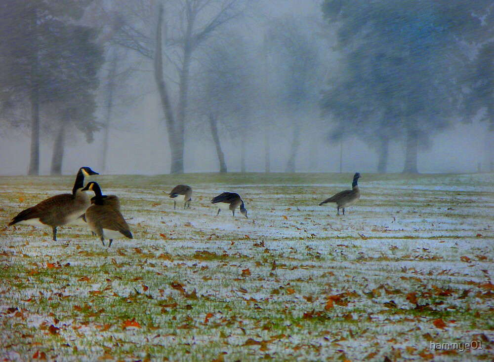 Snow Geese by hammye01