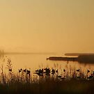 Foggy Morning by Paul Lenharr II