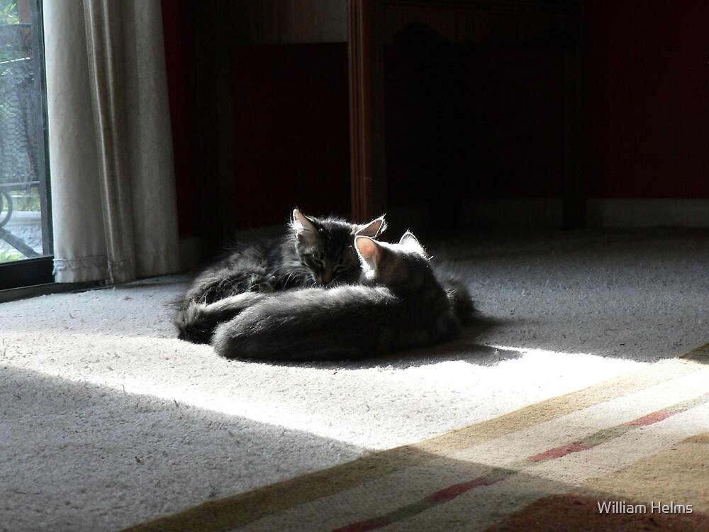 Kittens Sleeping by William Helms