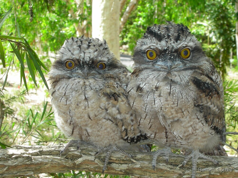 two in a tree by Belinda Cottee