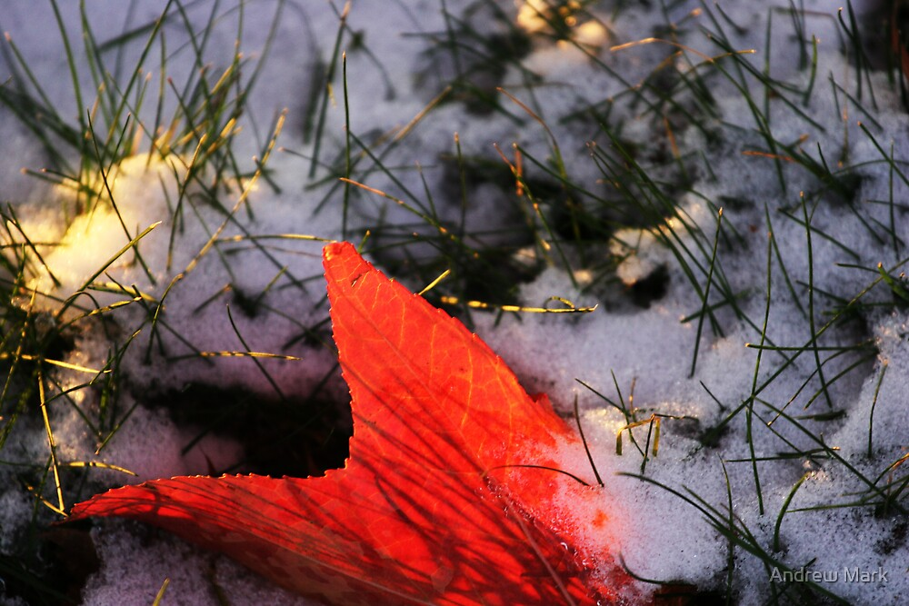 Sunset LeaF by Andrew Mark