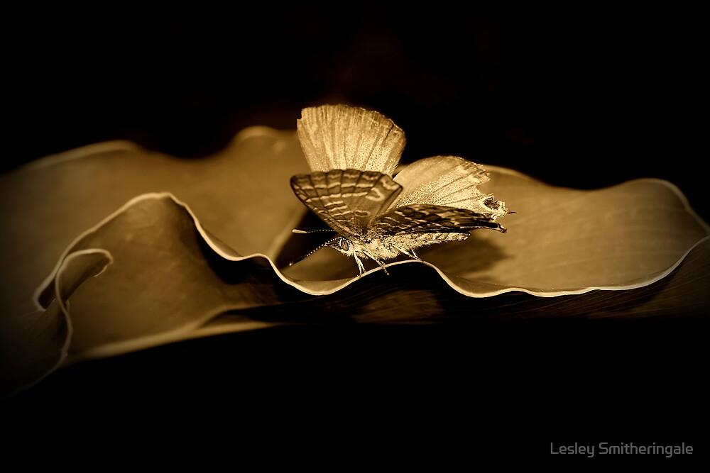 On the Edge - antique by Lesley Smitheringale