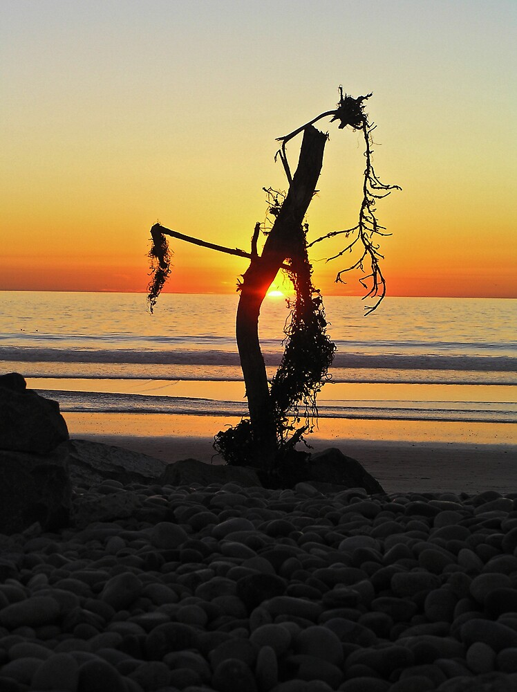 Sunset and Driftwood by Chuck Cannova