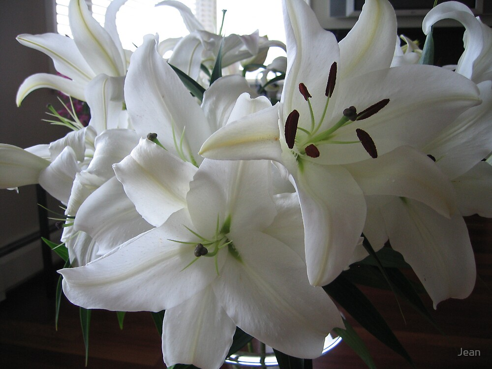 Close up on Lillies by Jean