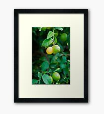 Lemons and Limes, here's to good times! Framed Print