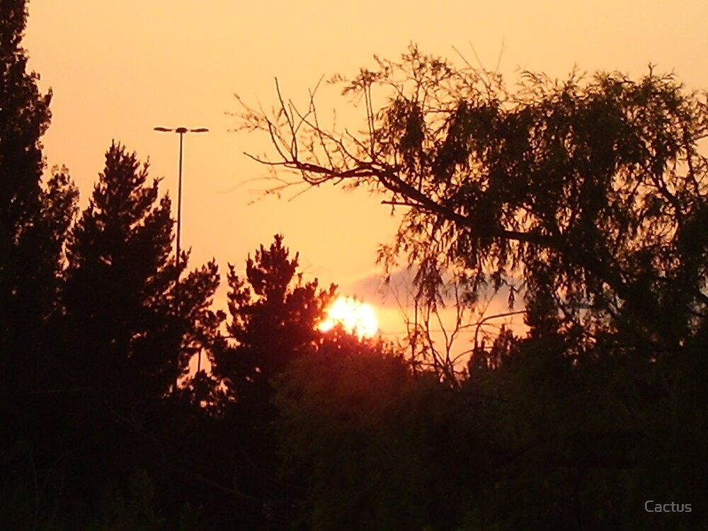 Sun Rise Behind Trees by Cactus