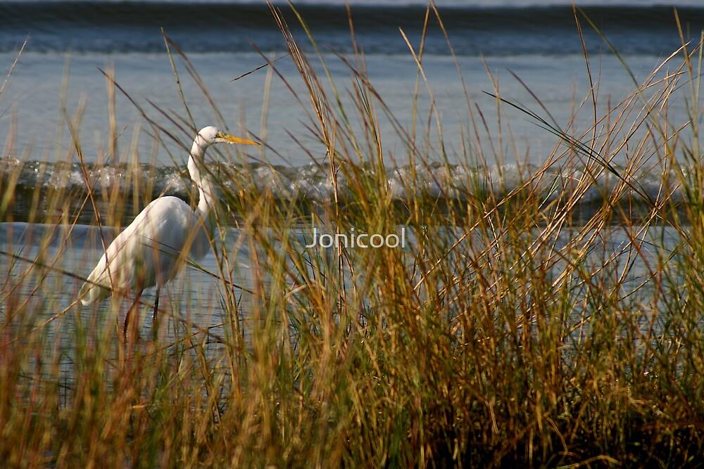 Hidden Egret by Jonicool