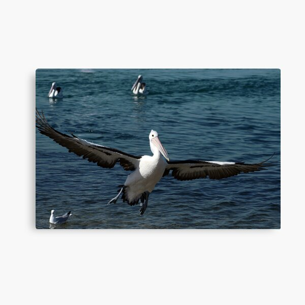 In for a Landing Canvas Print