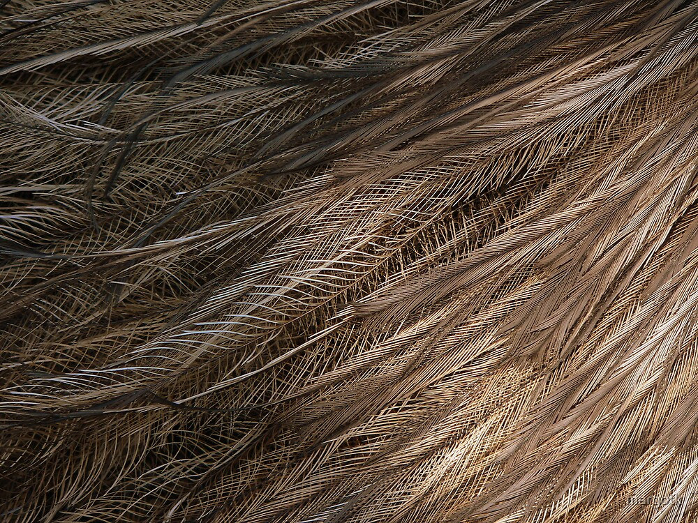 Emu Plumage by margotk