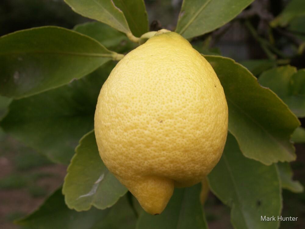 Lemon by Mark Hunter