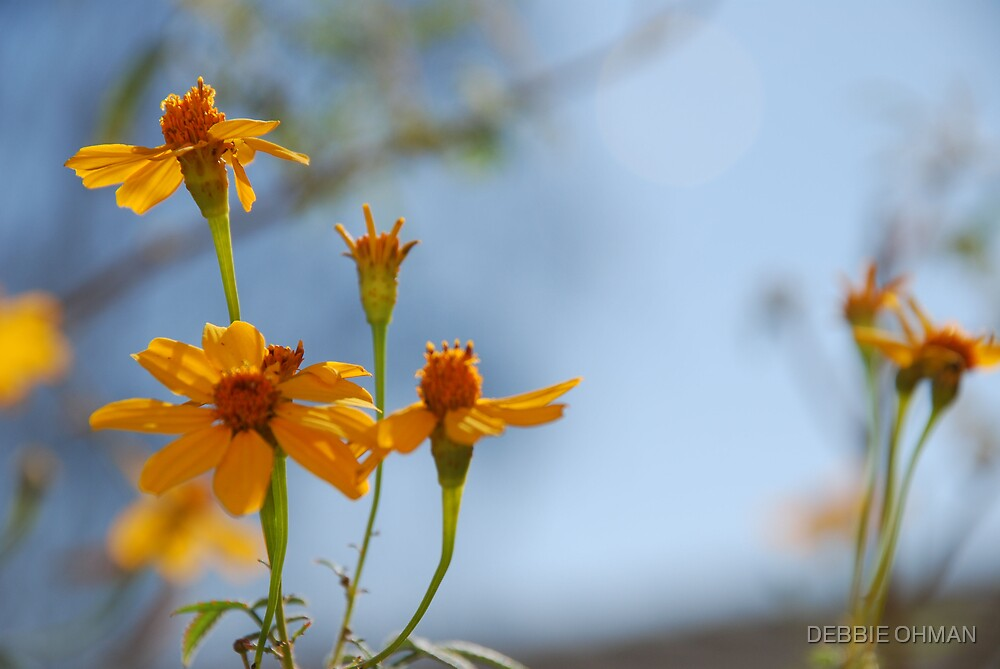 Standing Tall by DEBBIE OHMAN