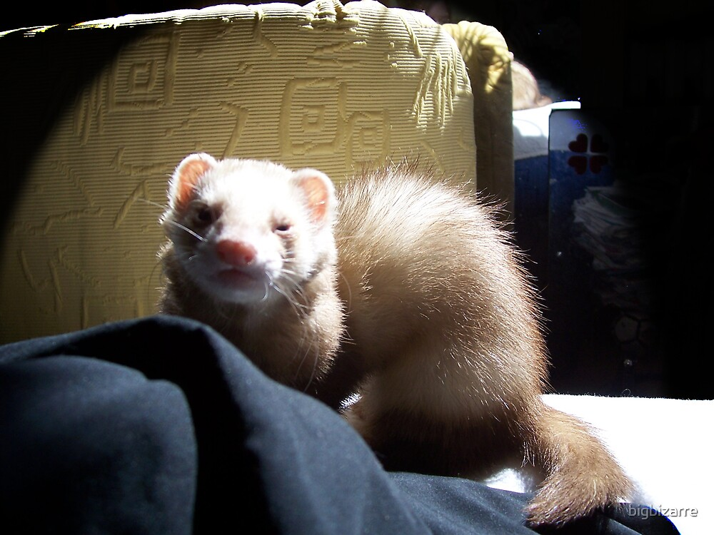 Ferret Girl by bigbizarre