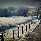 Frosty Sparks Lane HDR  by Douglas  Stucky