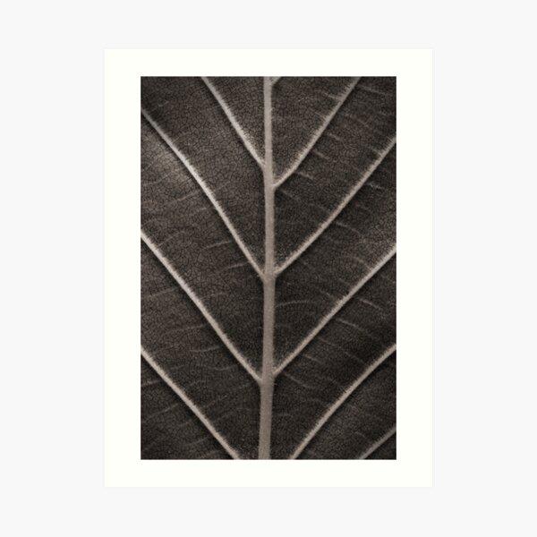 Nature's Design Art Print