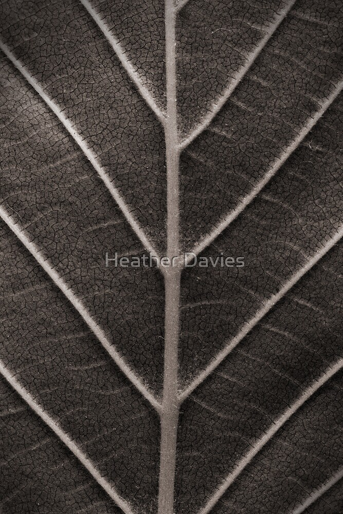 Nature's Design by Heather Davies