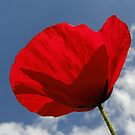 Poppy in the Blue by AnnDixon