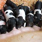 Piggy Feeding Time by CreativeEm